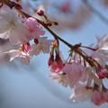 行く春を愛でる~♪