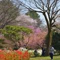 春 酣~♪