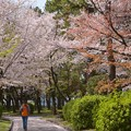 今年の春・名古屋城で~♪