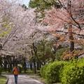 写真: 今年の春・名古屋城で~♪