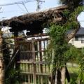 Photos: 空き家の門~♪