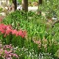 写真: 春の花達~♪