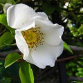 写真: 道端の花~♪