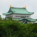 初夏の名古屋城~♪