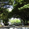 Photos: 白川公園~♪