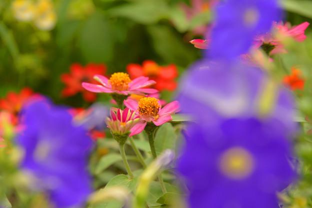 写真: 夏の花達~♪
