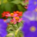 Photos: 夏の花達~♪