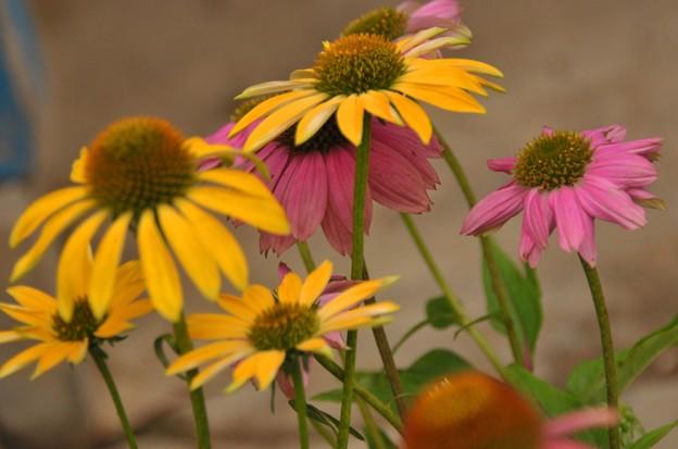 夏の花~♪