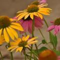 Photos: 夏の花~♪
