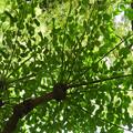 この木何の木?きれいな葉~♪