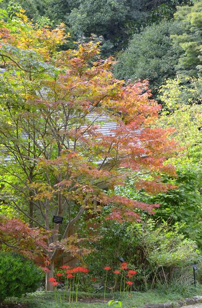 秋めいて~♪