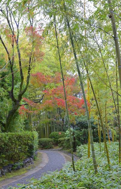 竹林に紅葉~♪