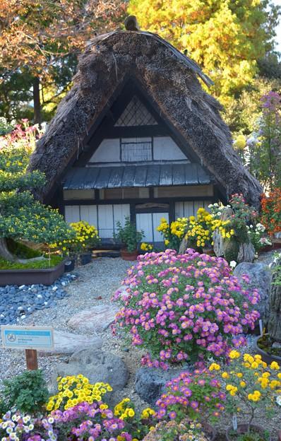 写真: 日本の原風景~♪