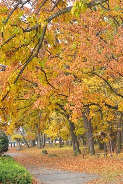 黄葉の散策路~♪