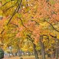 写真: 黄葉の散策路~♪
