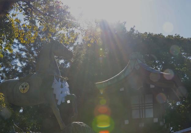 真清田神社 神馬~♪