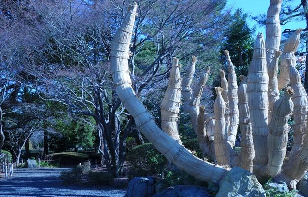 名古屋城 冬景色~♪