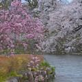 枝垂れ桜も共演~♪