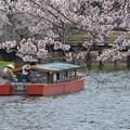 満開の桜と屋形船~♪