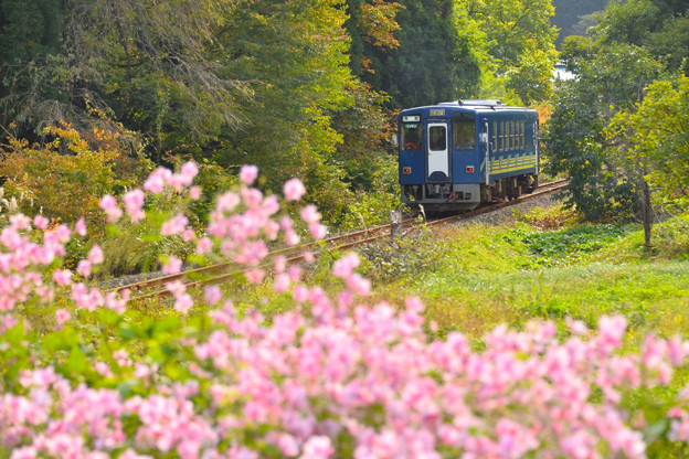 写真: 秋の秋田内陸線1
