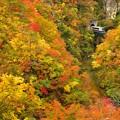 写真: 秋の鳴子峡2