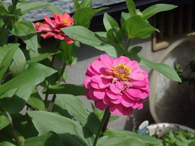 かわいい花が咲きました