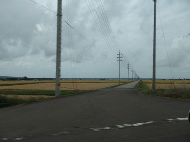 田んぼと電柱と