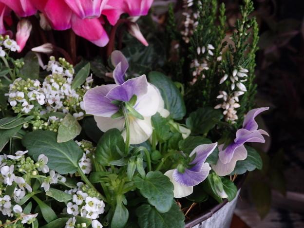 お花、いただきました