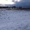 田んぼに雪