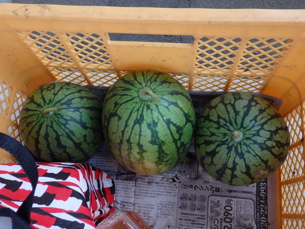 Photos: 小玉スイカ 3個収穫