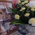 Photos: むっちゃんの写真とお花と