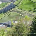 Photos: 正法寺より