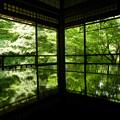 Photos: 新緑の角