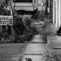 Photos: 300505-鶴見線22