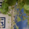 写真: 300519-江ノ島11
