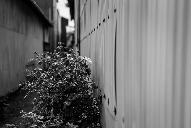 300527-川越21