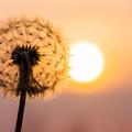 写真: いつか花咲く日を夢見て…。