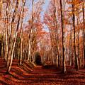 ~落葉の物語1~踏み歩く音を楽しみながら