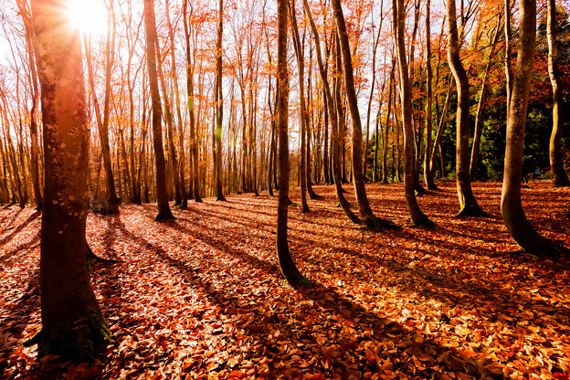 ~落葉の物語2~優しい光に包まれて…。