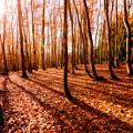 Photos: ~落葉の物語2~優しい光に包まれて…。