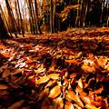 Photos: ~落葉の物語3~そして大地の糧となる