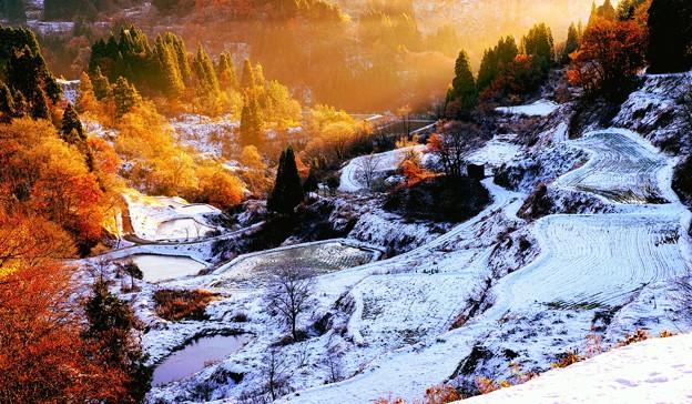 ~秋の彩りと冬の彩りのコントラスト~