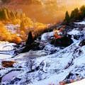 Photos: ~秋の彩りと冬の彩りのコントラスト~