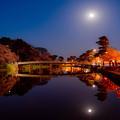 Photos: ~月夜と夜桜に誘われて~