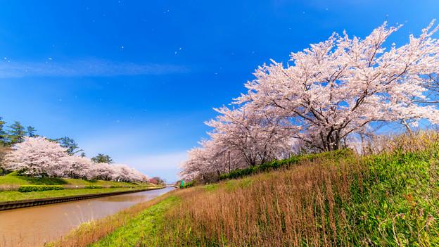 ~春爛漫~