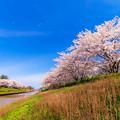 Photos: ~春爛漫~