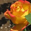 写真: 花の女王