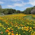 写真: 空と大地の花と
