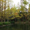 万博記念公園 モミの池