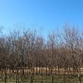 武蔵野公園 冬